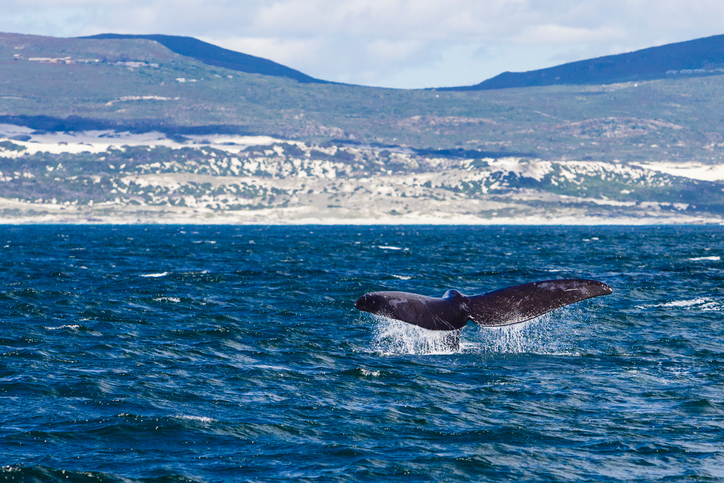 Sudafrica: whale watching