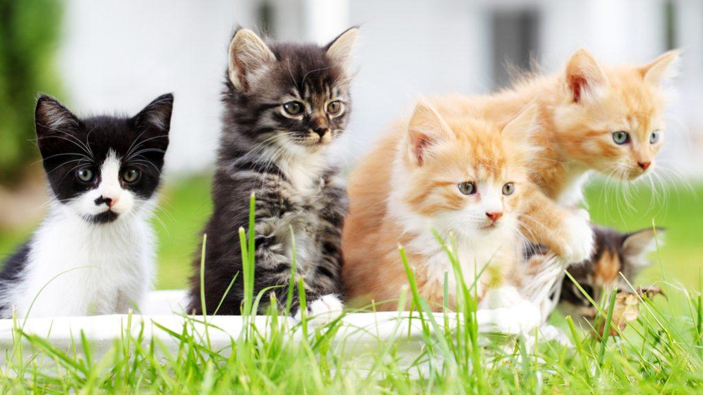Foto di gattini: guardandole ci si ama di più