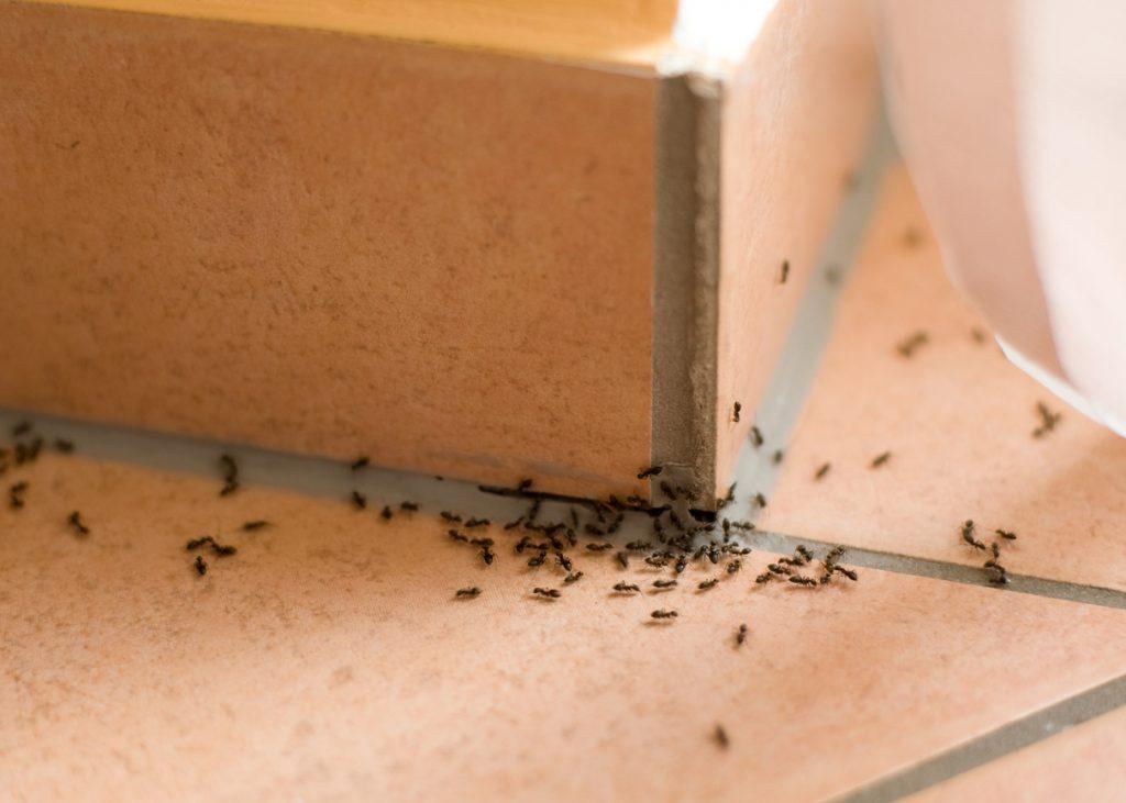 Formiche in casa: come tenerle a bada