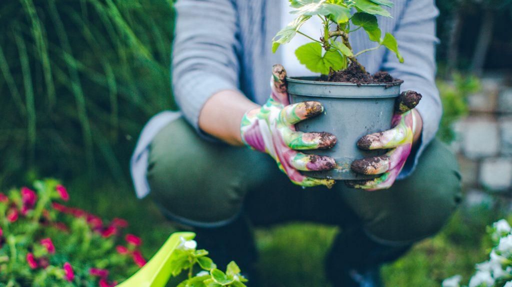 Giardinaggio piante cura le piante come curare le for Curare le piante