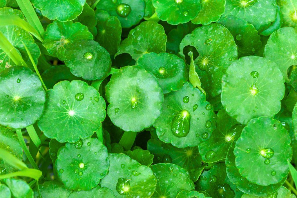 Le dieci erbe che fanno bene alla nostra salute