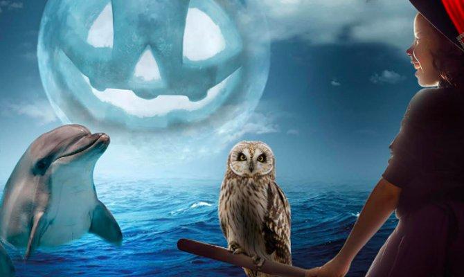 Riccione festeggia Halloween tra zucche e squali