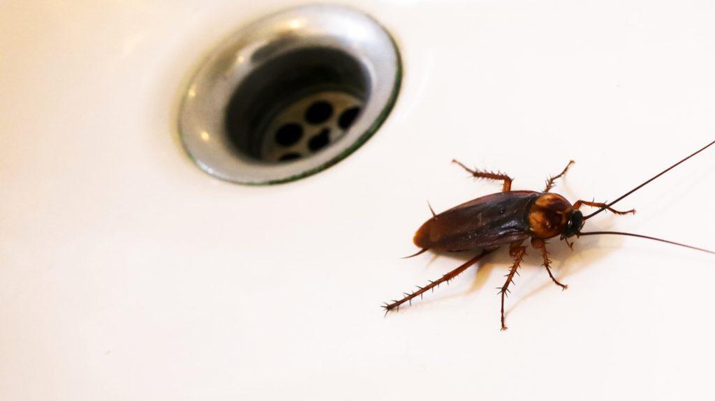insetti da appartamento