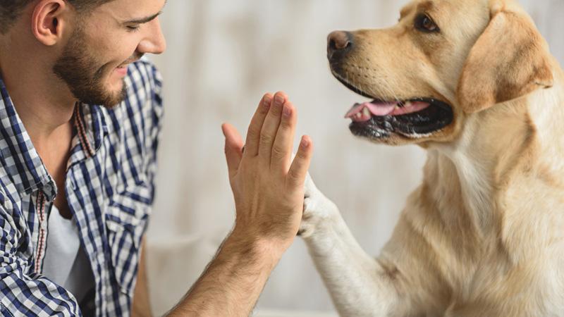 Un animale domestico allunga la vita: lo dice la scienza