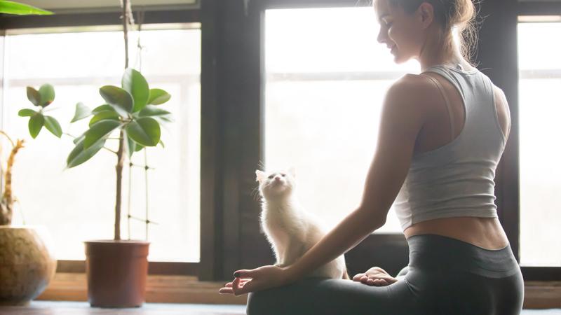 Cat Yoga, in America ci si allena con i gatti