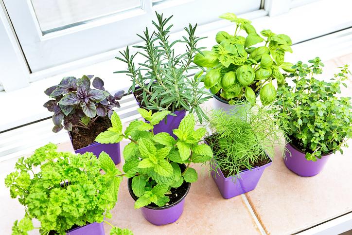 Erbe aromatiche consigli per coltivarle bene in casa - Coltivare piante aromatiche in casa ...
