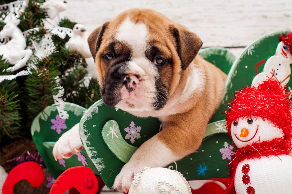 Animali domestici: e se a Natale arrivasse un cucciolo?