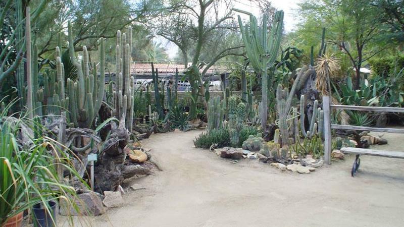 Moorten Botanical Garden: il più social del mondo