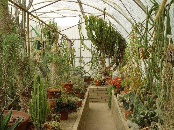 Moorten Boatanical Garden