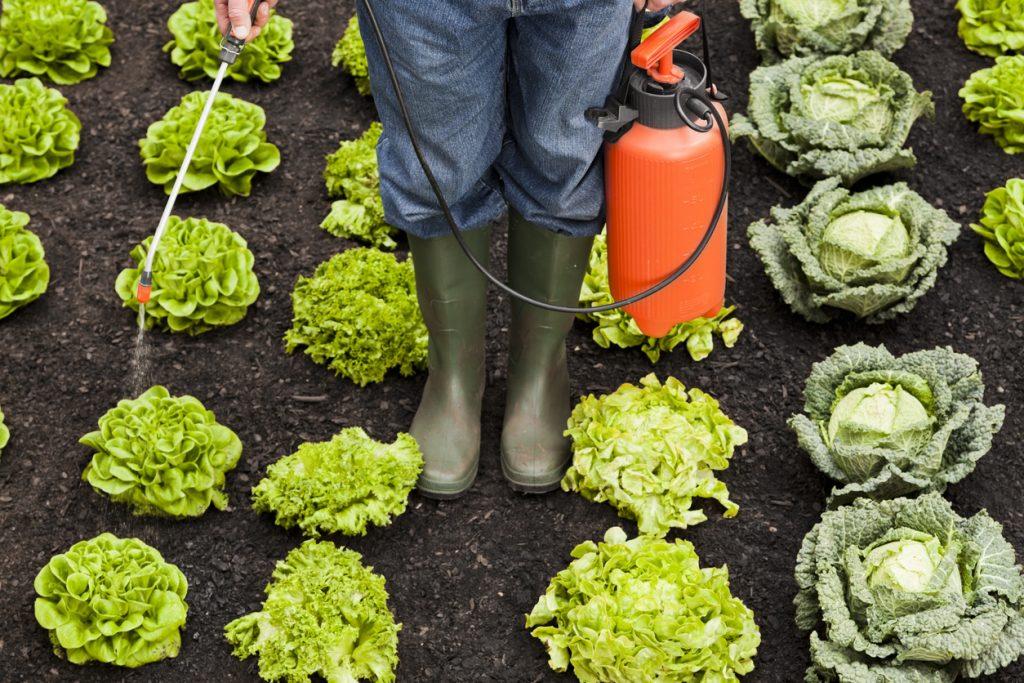 Pesticidi su frutta e verdura. Come mangiare in sicurezza