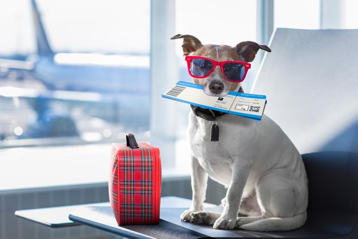 Vacanze per cani: perchè ne hanno bisogno