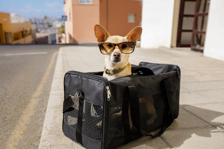 Animali che viaggiano in aereo cosa sapere for Quali compagnie aeree portano animali domestici in cabina