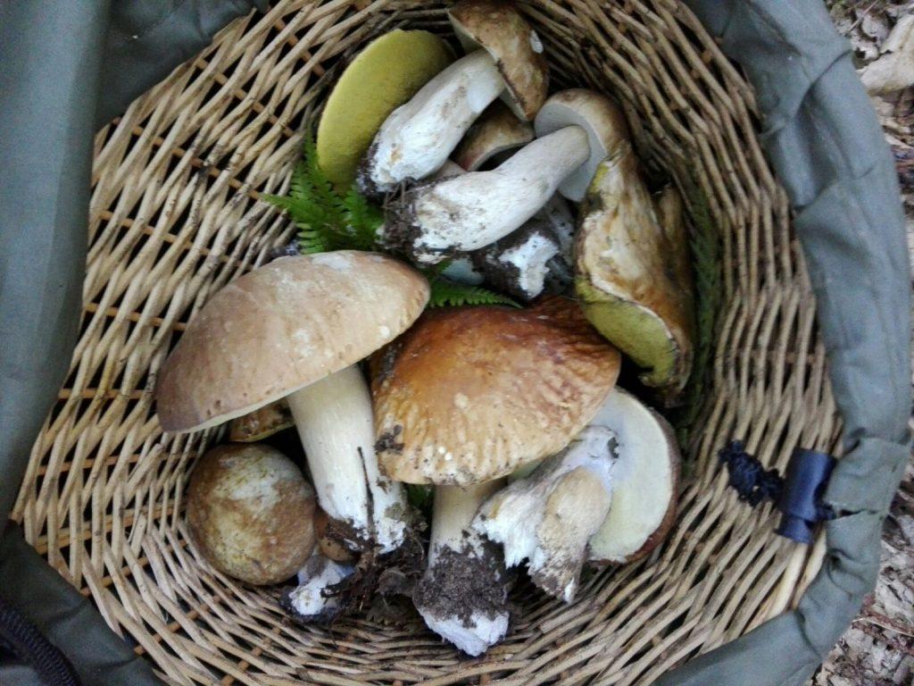 Ricetta tradizionale della zuppa di funghi porcini