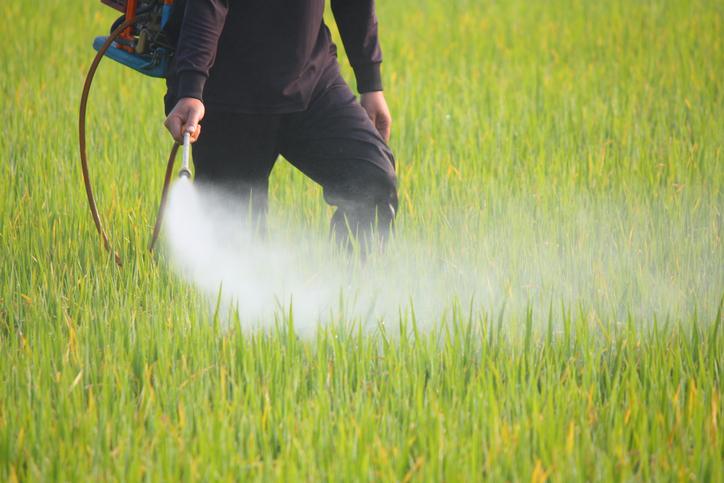fragole e spinaci contaminati da pesticidi