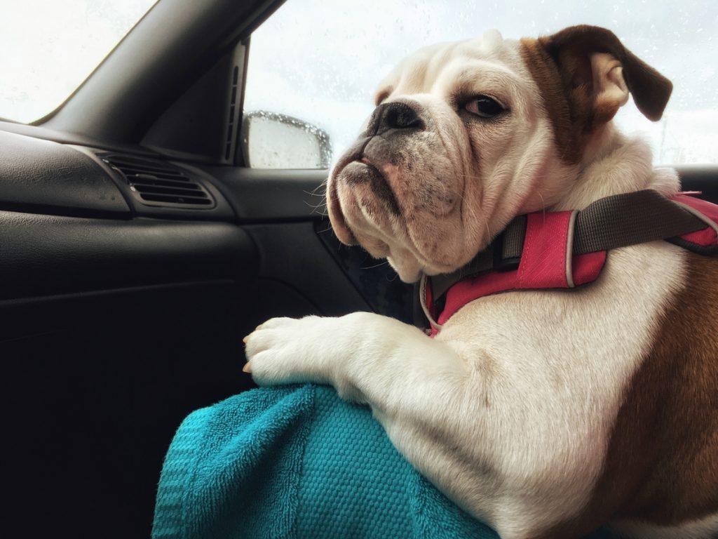 Tre cose che il tuo cane odia (e tu ignori)