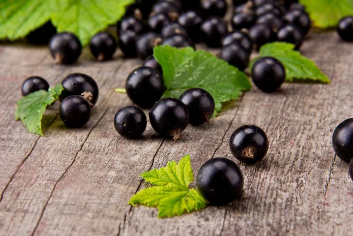 Ribes nero, dai frutti alle foglie un concentrato di virtù
