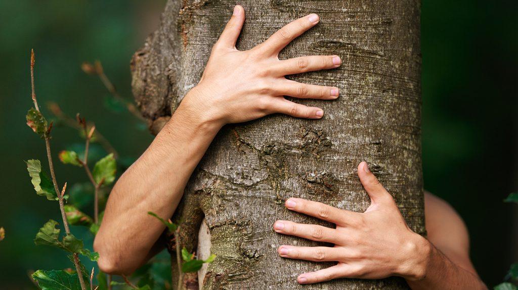 Forest therapy, abbracciare gli alberi migliora l'umore