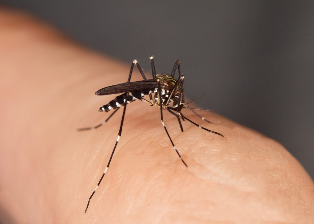 Come proteggersi dalle punture degli insetti