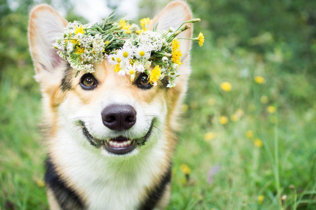 Cani infelici? Come capire i nostri amici a 4 zampe