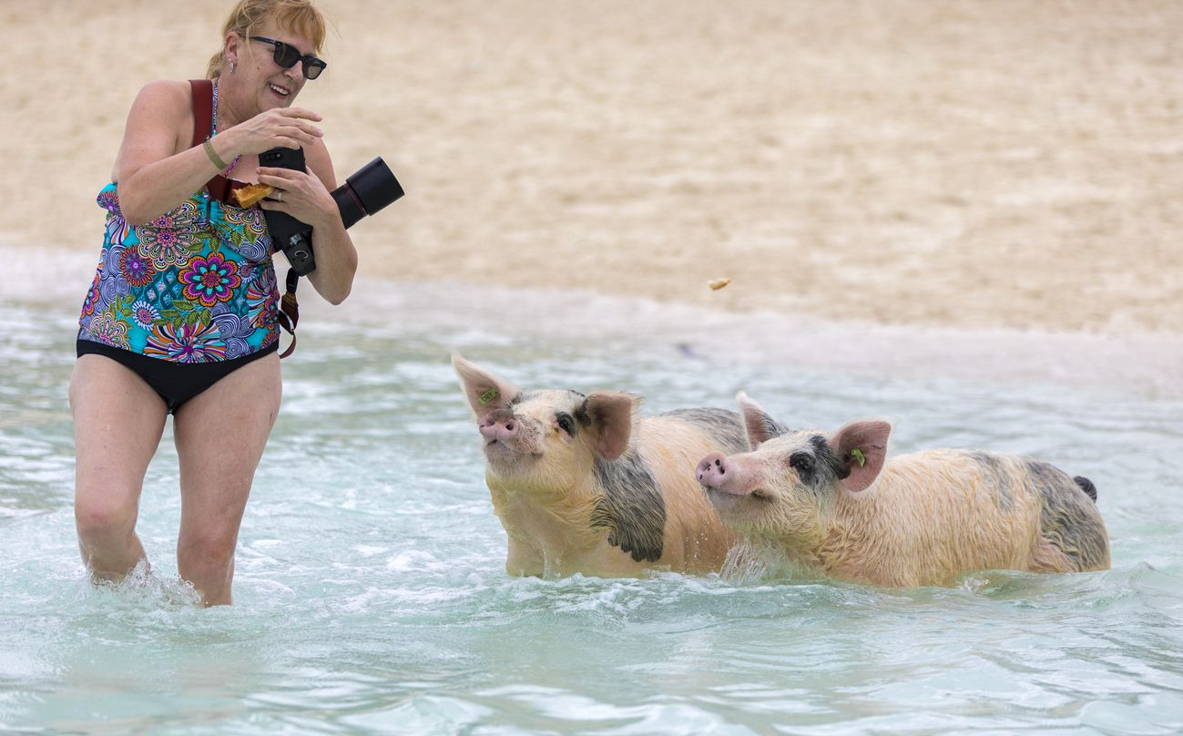 Fare il bagno con gli animali quali sono i luoghi migliori - Quali sono i migliori sanitari bagno ...