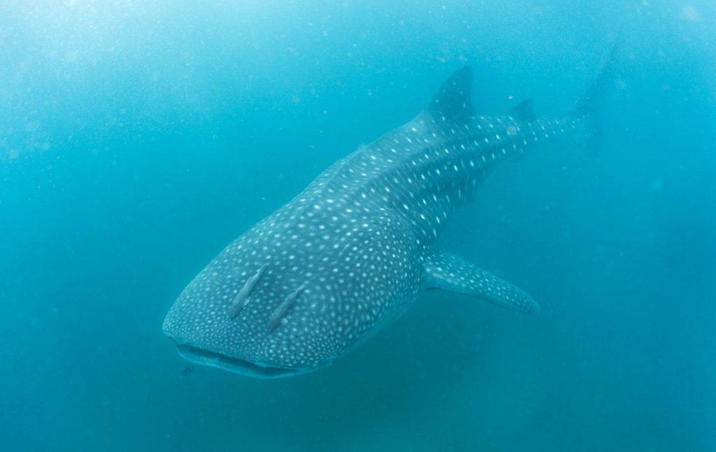 Fare il bagno con gli animali quali sono i luoghi migliori - Bagno con gli squali sudafrica ...