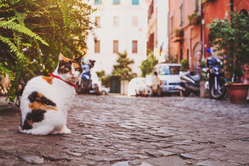Le 10 destinazioni italiane più pet-friendly