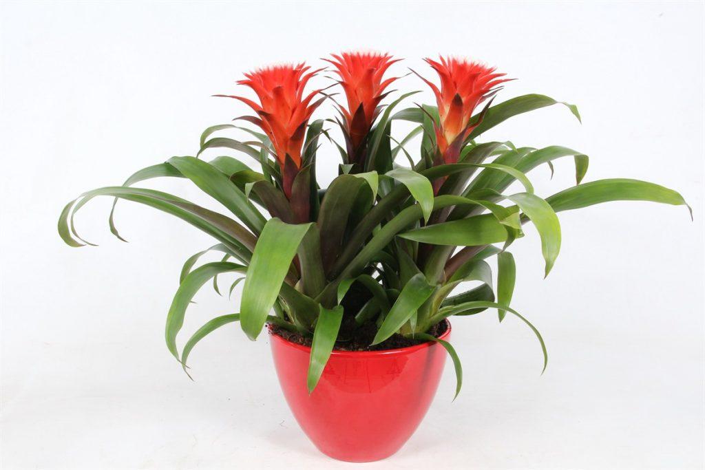 Quali piante scegliere in casa