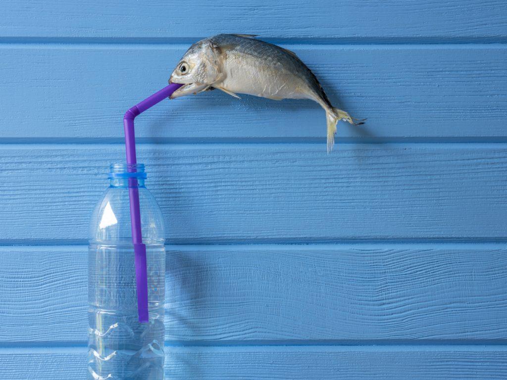 Plastica nel cibo, mangiamo ciò che laviamo (in lavatrice)