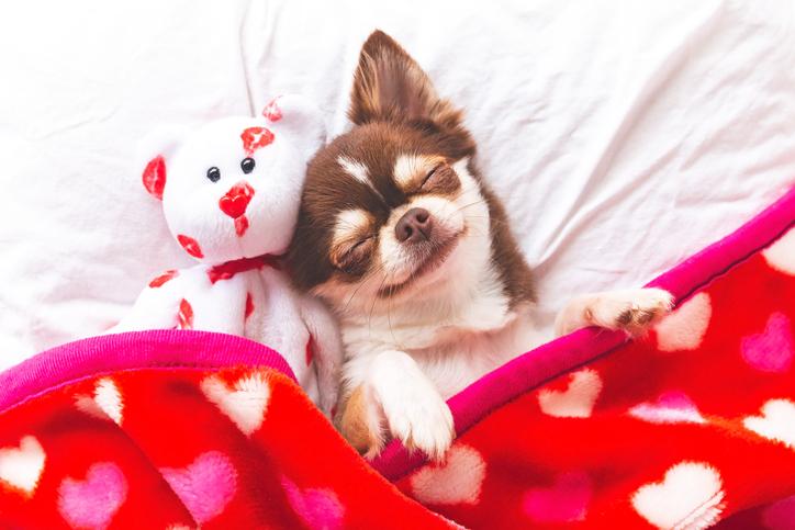 Cani E Bambini Ricerca Attaccamento Emotivo Oggetti