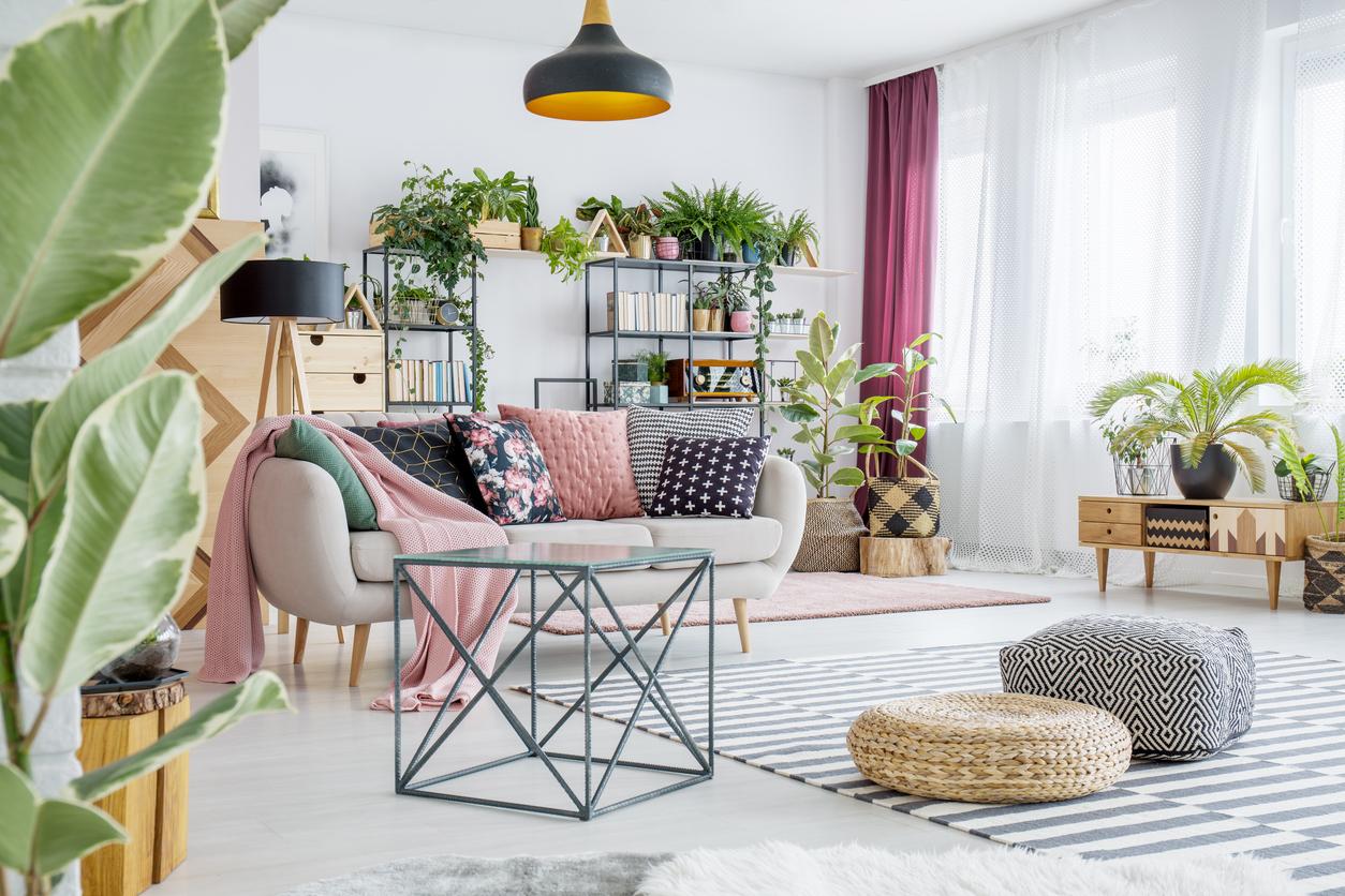 Piante Da Arredo Appartamento piante trendy per arredare casa con stile: quali sono le più