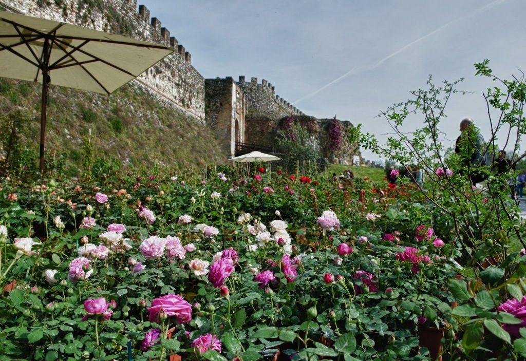Fiori nella Rocca, colori e profumi vista lago