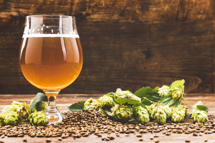 Luppolo, perché fa bene bere birra secondo la scienza