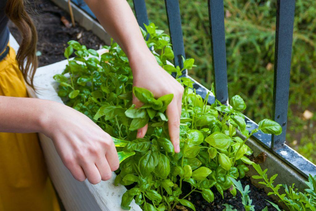 Come realizzare un orto in balcone