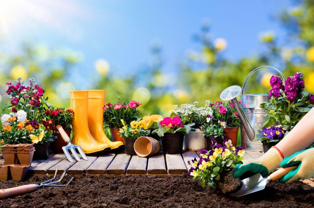 cura del giardino