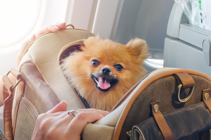 Animali in vacanza, i consigli per chi viaggia