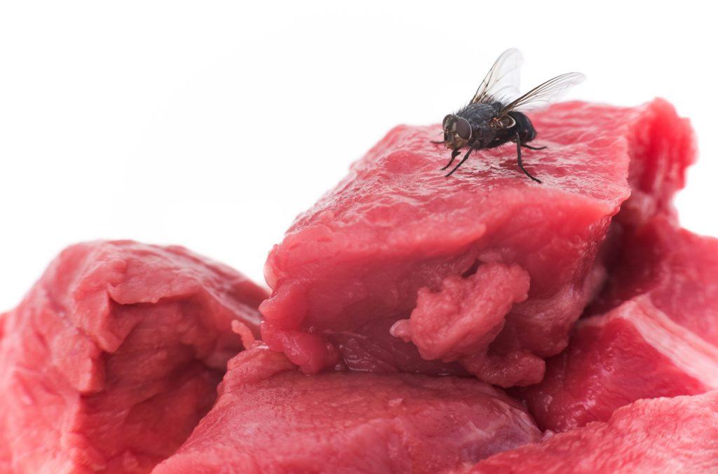 insetti in casa
