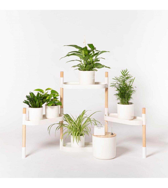 Come Far Morire Una Pianta piante indoor da coltivare con app e nuove tecnologie - www
