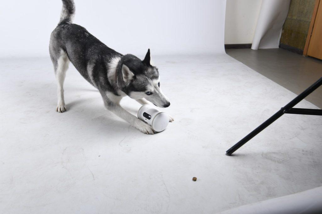 Pigrizia addio, il pet robot tiene in forma cani e gatti