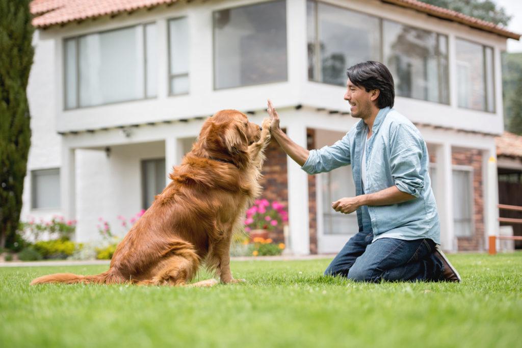 addestrare cane