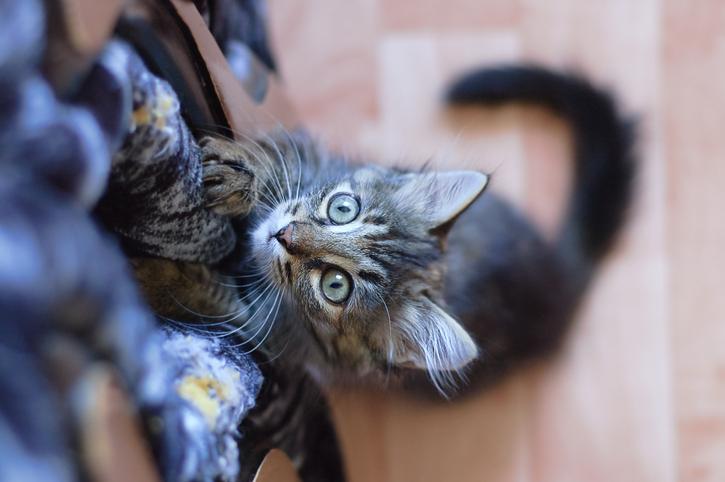 Gatto versus divano: come evitare che lo graffi