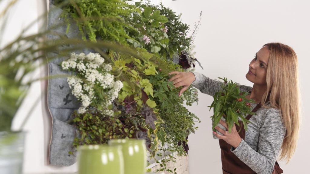 Giardino verticale, il verde a poco prezzo