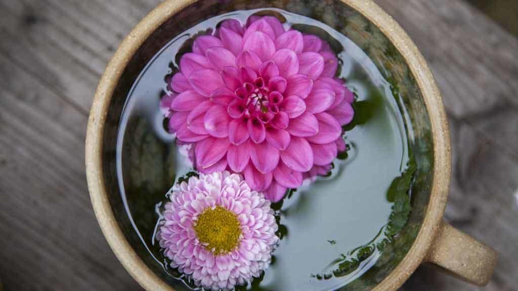 Mini-giardino in tazza