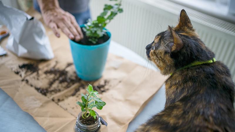 piante pet-friendly