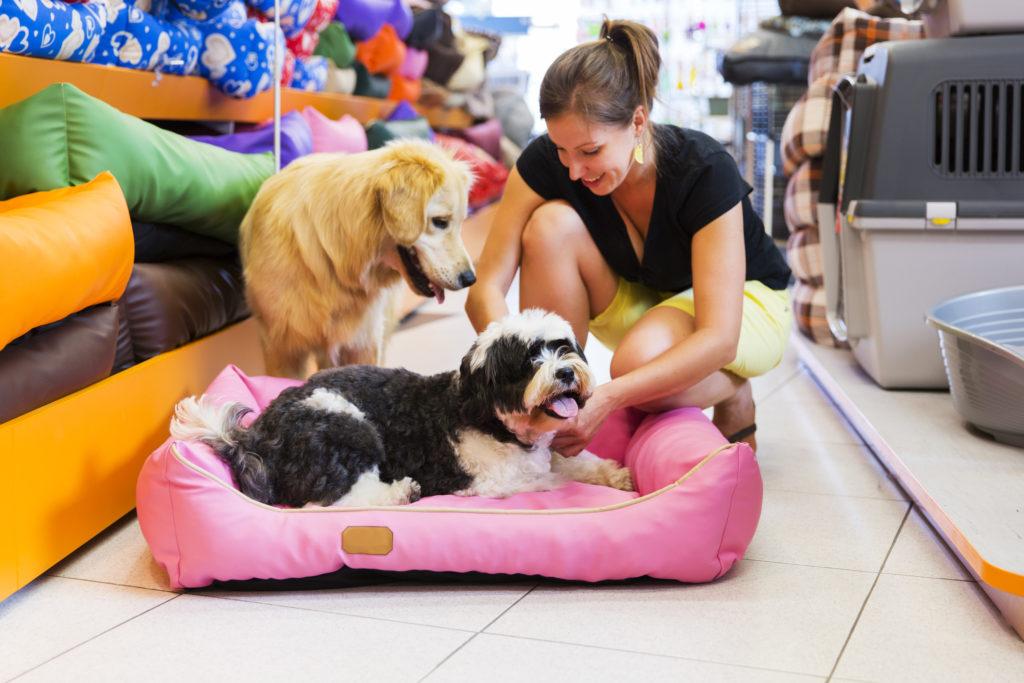Accessori per cani e gatti: utili o solo moda?