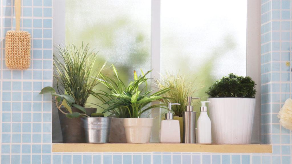 Dall'orchidea all'aloe: le piante che arredano il bagno