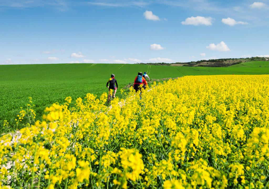 persone in biciclette in mezzo a un campo fiorito