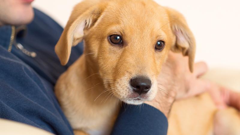 cucciolo in braccio ad una persona