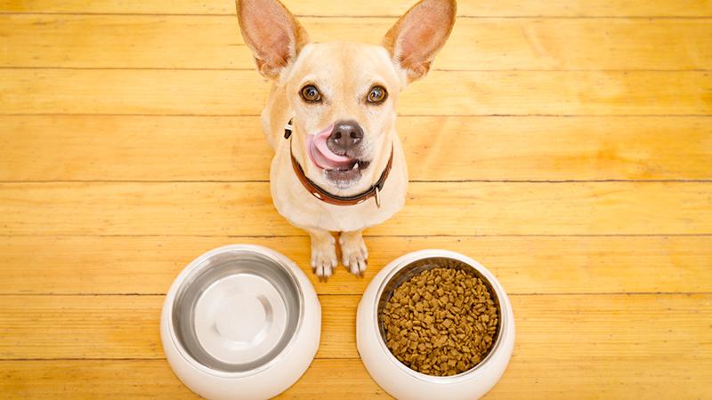 cane e ciotole con croccantini