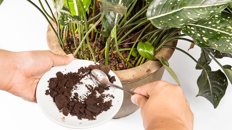 fondo di caffè per la pianta