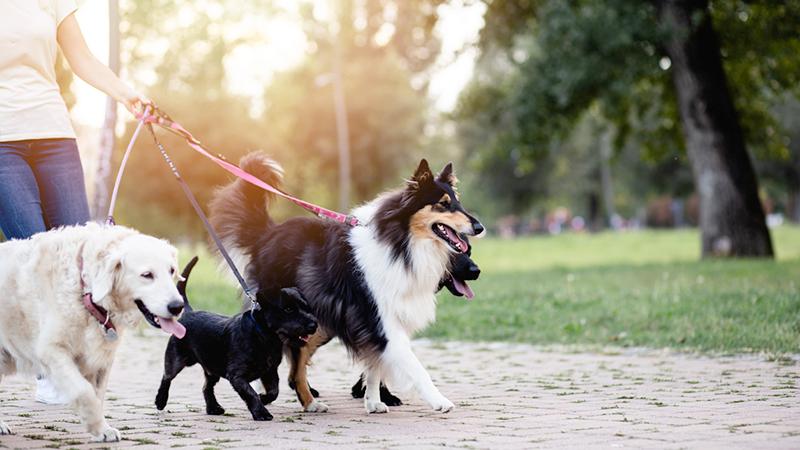 dog sitter con cani